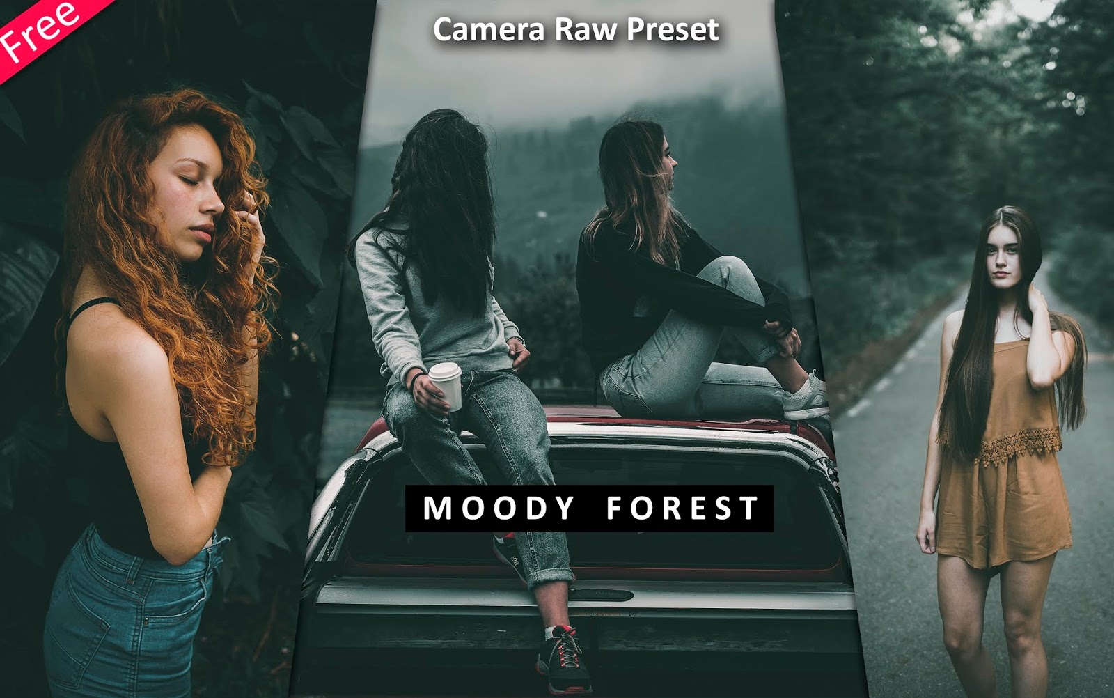 Download Moody Forest Camera Raw Preset for Free | How to Edit Your Photos Like Moody Forest Effect in Photoshop